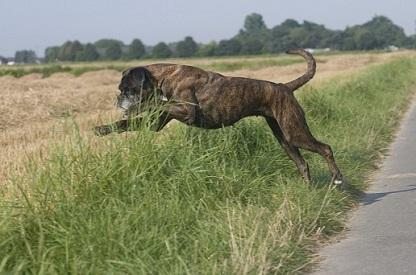 Diät für Hunde mit Nierenproblemen