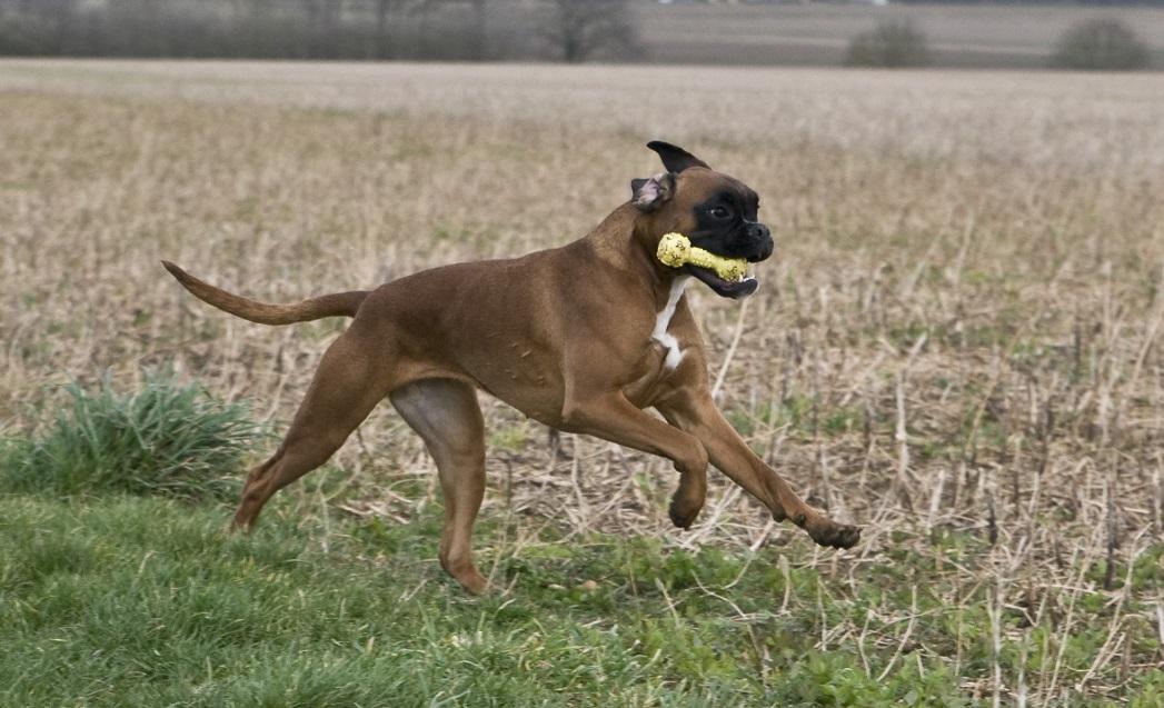Blutiger Kot: für einen betroffenen Hund ist neben einer ...
